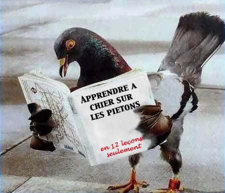 pigeon_apprenant