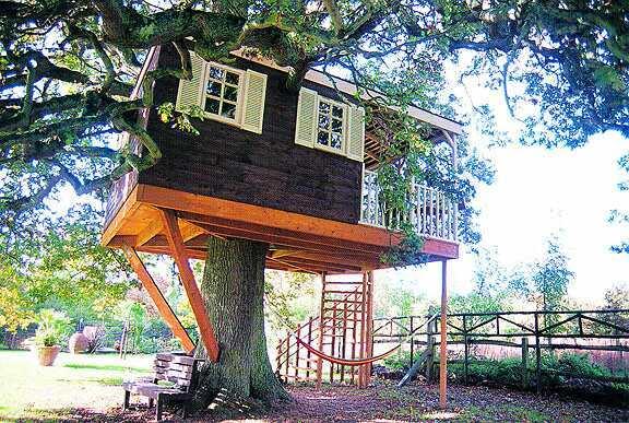 bric brac d 39 humour arbre dans la maison. Black Bedroom Furniture Sets. Home Design Ideas